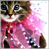 kitty avatar